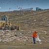 working in the land fill.: Working in a landfill
