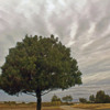 storm clouds rolling in.: Shoreline Lake, cloud's behind the tree, before the big storm.