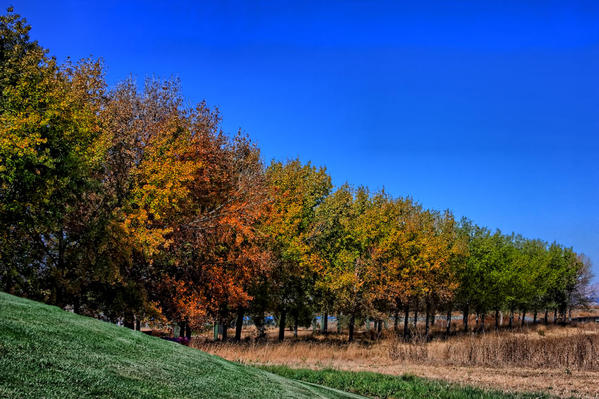 A line of Autumn trees.