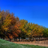 A line of Autumn trees.: Colorful line of trees, in Sunnyvale