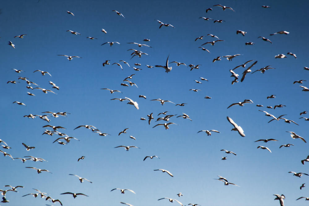 a sky filled with birds