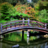 A bridge in a Japanese Garden  2