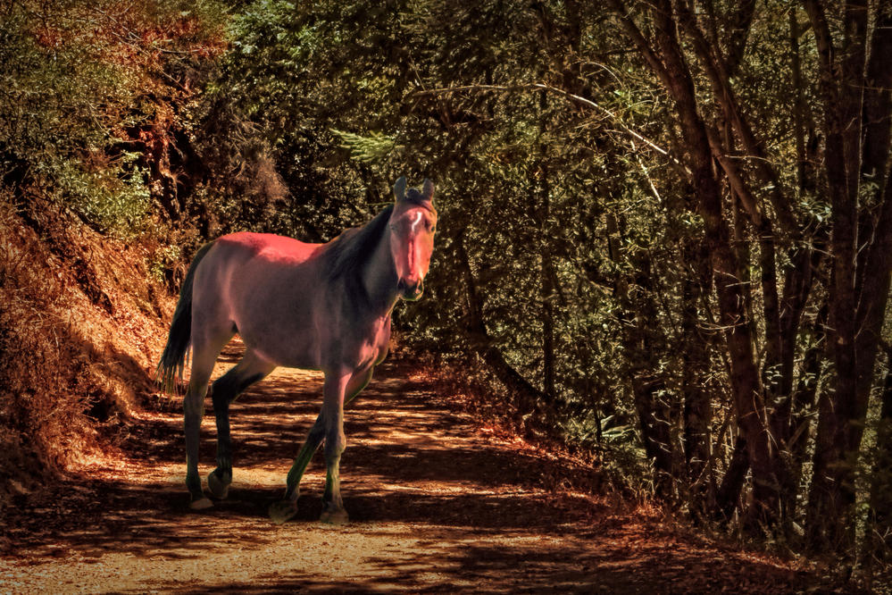 Horse on a trail